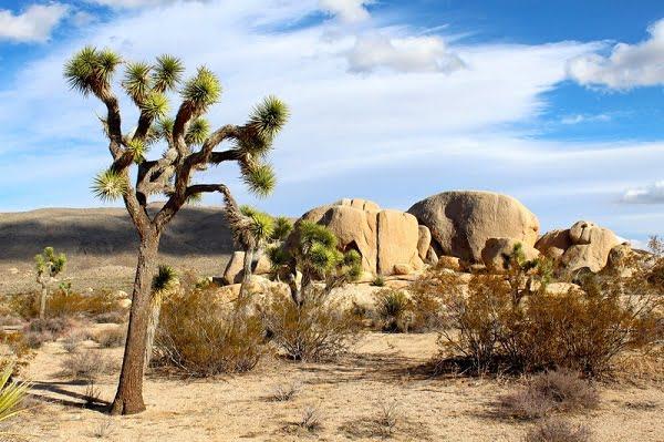 Citta, clima e cosa vedere del Deserto di Mojave