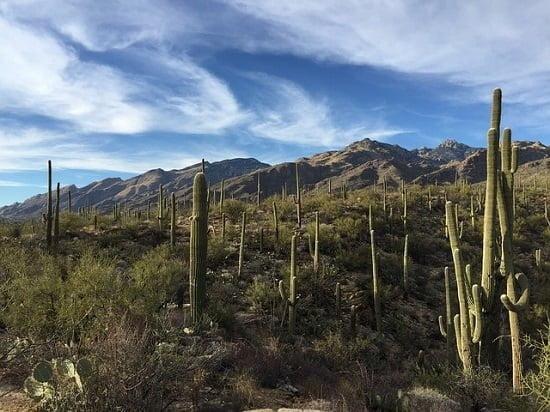 saguaro-national-park
